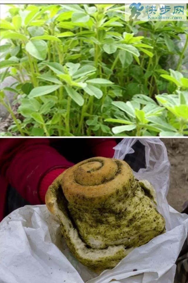 过有年味的年从开始自制香豆馍馍开始